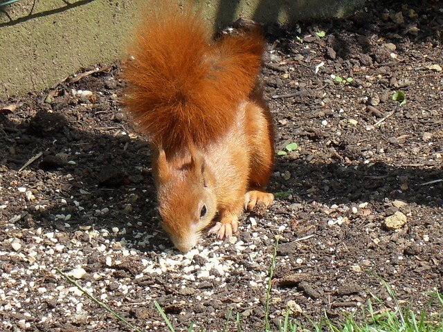 squirrel-52649_640.jpg